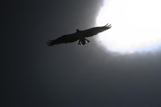 Bird in a Cave