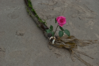 Vince Ferguson - Rose and Seaweed, Digital Image