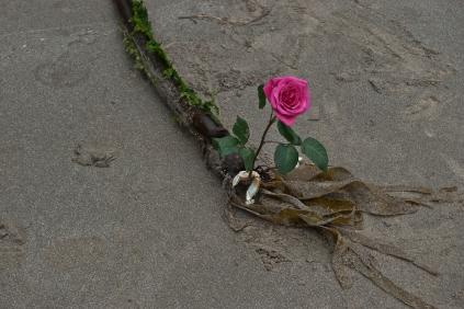 Vince Ferguson - Rose and Seaweed, Digital Image