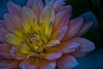 Emerald Studio Photography, Golden Glow, Digital Photograph