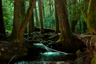 Vince Ferguson - Ramona Creek Meanders Through the Forest, Photogeraph