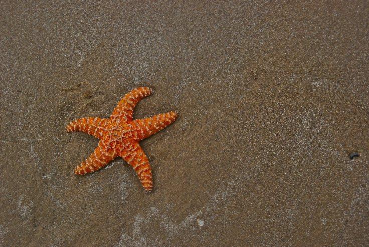 Vince Ferguson - Starfish, Digital Image