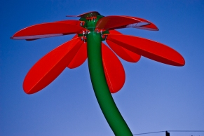Vince Ferguson - Steel Flower, Photograph