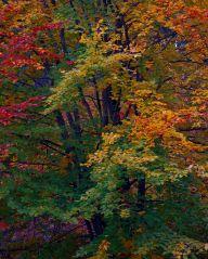 Vince Ferguson - Autumn Abstract - Digital Image