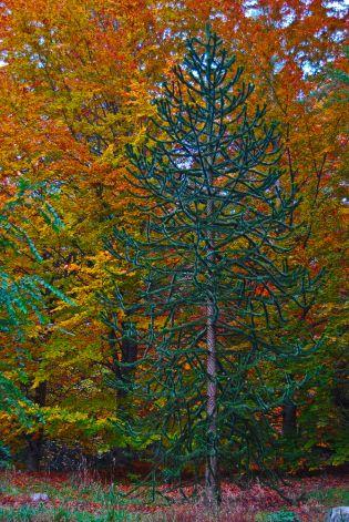Vince Ferguson - Autumn Monkey - Digital Image