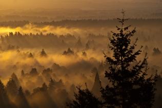 Vince Ferguson - Foggy Forest - Digital Image