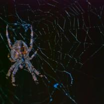 Vince Ferguson - Hobo Spider II - Digital Image
