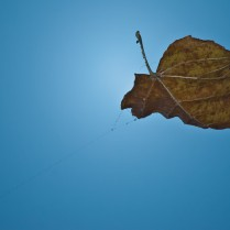 Vince Ferguson - Spider Kyte Flying - Digital Image