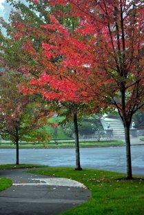 Vince Ferguson - Three Red Trees - Digital Image