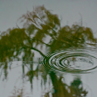 Vince Ferguson - Reflected Tree - Digital Image