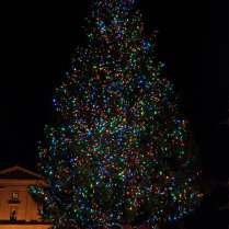 Vince Ferguson - Pioneer Square Christmas Tree - Digital Image
