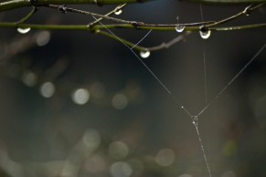 Vince Ferguson - Webbed Branch - Digital Image