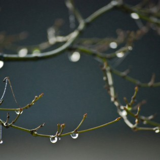 Vince Ferguson - Wet Winter Branch - Digital Image