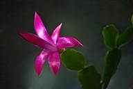 Vince Ferguson - Winter Cactus 01 - Digital Image