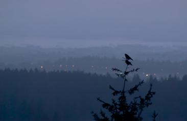 Vince Ferguson - Something to Crow About - Digital Image