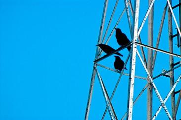 Vince Ferguson - Three Crows - Digital Image