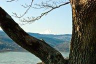 Vince Ferguson - Mount Hood Framed - Digital Image