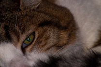 Vince Ferguson - Sinatra Eye - Digital Image