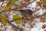 Vince Ferguson - Bird in Tree - Digital Image