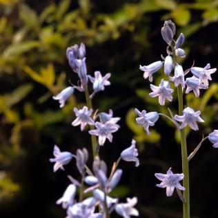 Vince Ferguson - Mystery Flower 03 - Digital Image