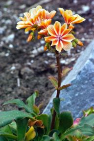 Vince Ferguson - Orange Flower 01 - Digital Image