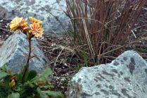 Vince Ferguson - Orange Flower 02 - Digital Image