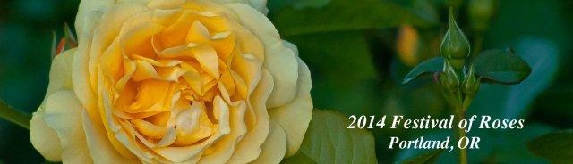 Vince Ferguson - Rose Panoramic - Digital Image