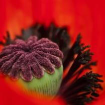 Vince Ferguson - Inside Poppy 02 - Digital Image