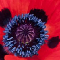 Vince Ferguson - Inside Poppy 03 - Digital Image