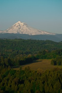 Vince Ferguson - Mount Hood and Field - Digital Image