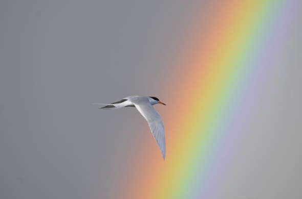 """Image Credit - """"Rainbows in the Sky"""" by LizaH"""