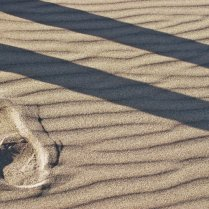 Vince Ferguson - Sand and Shadow - Digital Image