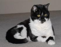 Vince Ferguson - Sweetpea the Cat - Digital Image