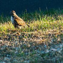 Vince Ferguson - Falcon Ground - Digital Image