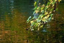 Vince Ferguson - Abstract Water Autumn - Digital Image