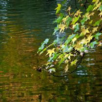 Vince Ferguson - Abstract Water Autumn - Digital Image