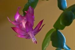 Vince Ferguson - Dragon Flower - Digital Image