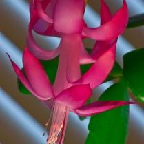 Vince Ferguson - Winter Cactus - Digital Image