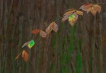 Vince Ferguson - Autumn Leaves - Digital Image