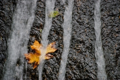 Vince Ferguson - Water Leaf - Digital Image
