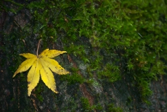 Vince Ferguson - Yellow and Green - Digital Image