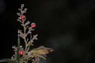 Vince Ferguson - Three Berries - Digital Image