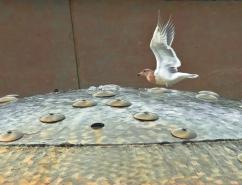 Vince Ferguson - Fountain Gull - Digital Image