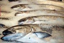C. Vincent Ferguson - Fish - Digital Image