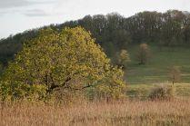 C. Vincent Ferguson - Sunrise Tree - Digital Image