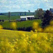 C. Vincent Ferguson - Willamette Valley Farm - Digital Image