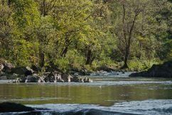 C. Vincent Ferguson - Washougal River Fish Jump - Digital Image