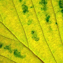 C. Vincent Ferguson - Autumn Green and Yellow - Digital Image