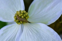 C Vincent Ferguson - Caterpillar on Flowers - Digital Image