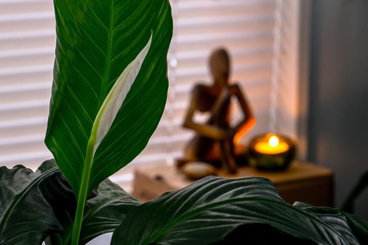 Peace Lily Meditation